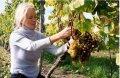 Czytaj więcej: Pośród kwitnącej winorośli
