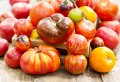 Czytaj więcej: Co warto wiedzieć o pomidorach?