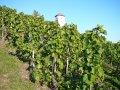 Czytaj więcej: Szwajcarskie wino i zbocza twierdzy Munot
